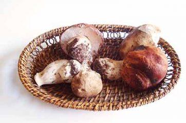Tagliatelle ai funghi porcini 8
