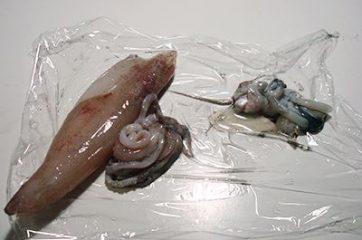Calamari ripieni 1